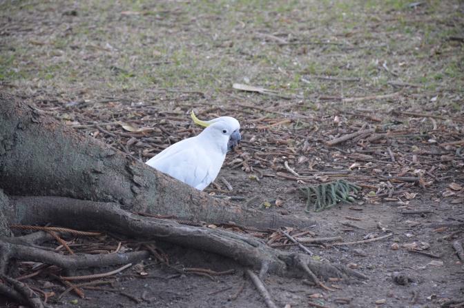 Aussie pics