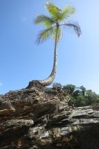Single island on a beach