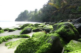 Mossed rocks on the beach