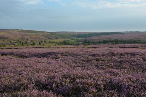 North York Moors 02
