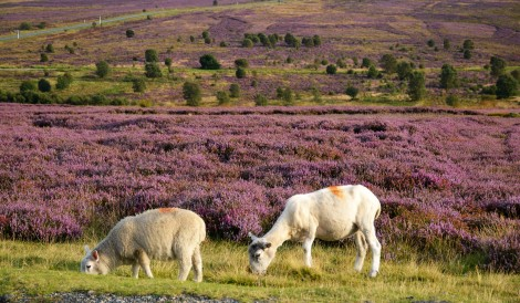 North York Moors 03